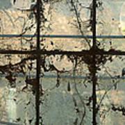 Window Vines Art Print
