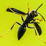 Window Wasp Art Print