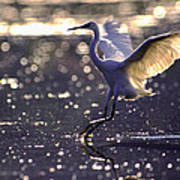 Wingdance Art Print