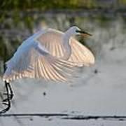 Wings Of Light Art Print