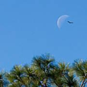 Wings Over Moon Art Print