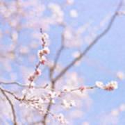 Winter Blossom Print by Jill Ferry