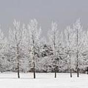 Winter, Calgary, Alberta, Canada Art Print