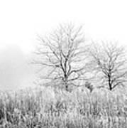 Winter Day Art Print