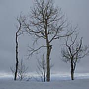 Winter Elegance Too Art Print
