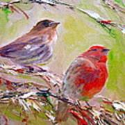 Winter Finches Art Print