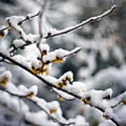 Winter Fleurs Art Print