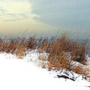Winter Grasses In Snow Art Print