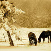 Winter Grazing Art Print