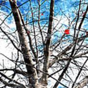 Winter Is Near Art Print