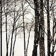 Winter Landscape On Snowy Day Art Print
