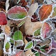 Winter Leaves Art Print by Linda Pope
