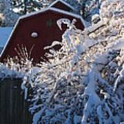 Winter Look Art Print