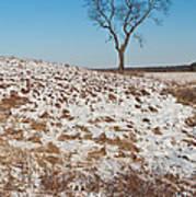 Winter Tree Nachusa Grasslands Art Print