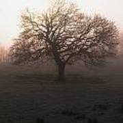 Winter Tree On A Frosty Morning, County Art Print