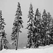 Winter Trees On Mount Washington - Bw Art Print