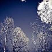 Winter Wonders Art Print