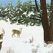 Wintering Whitetails Art Print