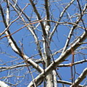Winter's Branches Art Print by Naomi Berhane