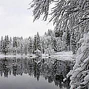 Wintery Reflections Art Print