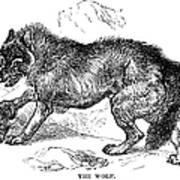 Wolf Attack Art Print
