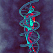 Woman And Dna Print by Christian Darkin