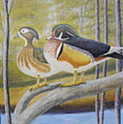 Wood Duck Pair At The Lake Art Print