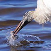 Wood Stork Fishing Art Print