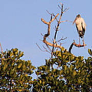 Wood Stork Out On A Limb Art Print