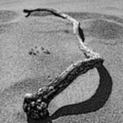 Wooden Serpent Art Print