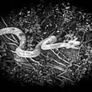 Wooden Snake Art Print