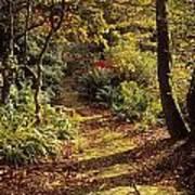 Woodland Path, Mount Stewart, Ards Art Print