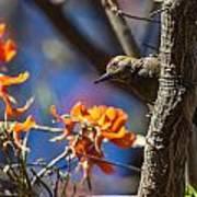 Woodpecker Listening Art Print