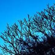 Woods And Sky Art Print