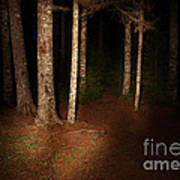 Woods At Night Art Print