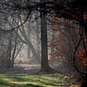 Woods - Dirt Road Photo - The Quiet Place Art Print