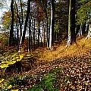 Woods During Autumn Art Print