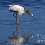 Woodstork Catches Fish Art Print