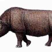Woolly Rhinoceros, Artwork Art Print