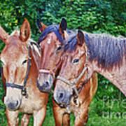 Work Horse Trio Art Print