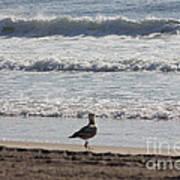 Wounded Seagull 4 Seagulls Birds Photos Beach Beaches Sea Ocean Oceanview Scenic Seaview Art Pics Art Print