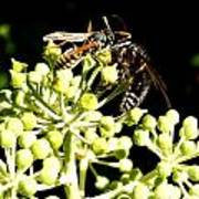 Wrangling Wasps Art Print