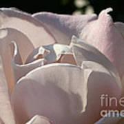 Wwii Memorial Rose Art Print