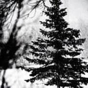 X-mas Tree Art Print