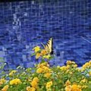 Yellow Against Blue Art Print