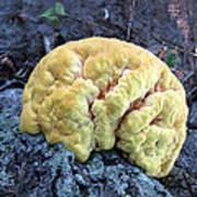 Yellow Brain Mushroom Art Print