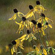 Yellow Coneflowers Art Print