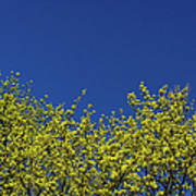 Yellow Flowers Tree Art Print