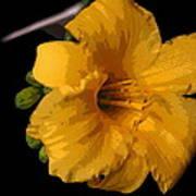 Yellow Glory Art Print