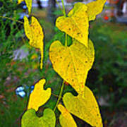 Yellow Heart Leaves  Photoart I Art Print